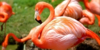 Thumb flamingo 847x565 - Rb7.Ru